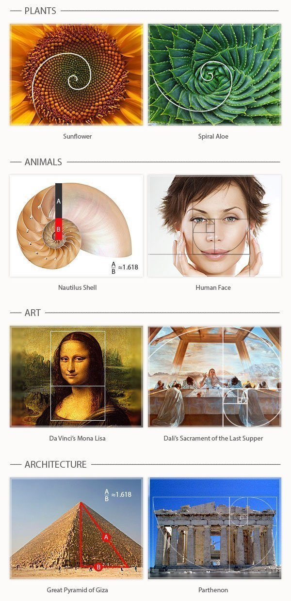 why golden ratio is important in designing