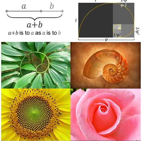 applications of golden ratio in design